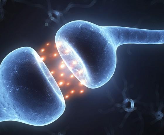 Prenos neurotransmitera između nervnih ćelija
